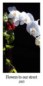 flowerstoourstreet
