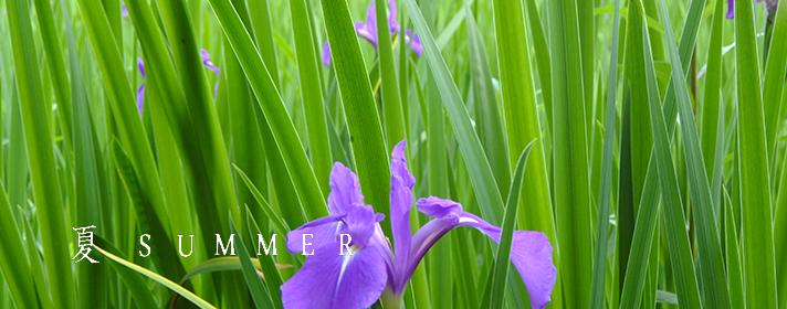 貼り付け 夏-かきつsummer