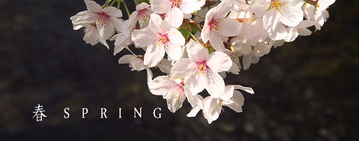 貼り付け 春spring