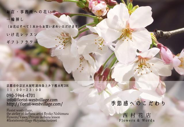 カード 桜